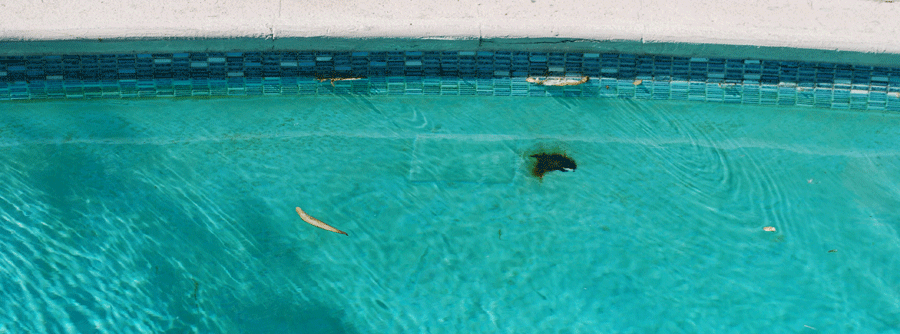 Pool Plaster Patching Compound : Patch a pool with plaster buckstracker